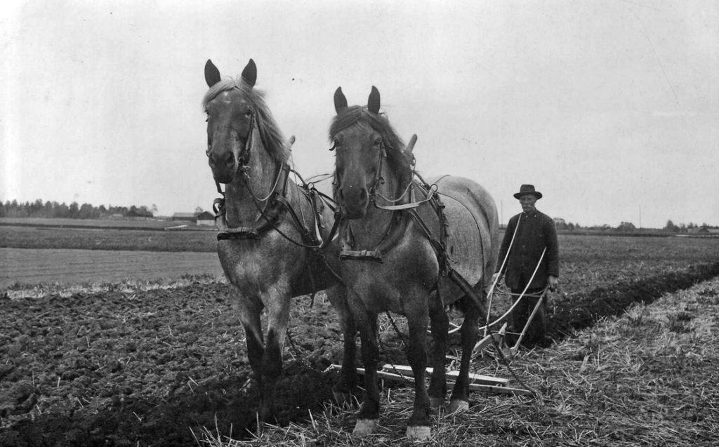 Eriksborg. Park med sina hästar